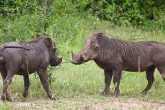naturparks_uganda_02n