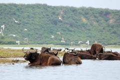 naturparks_uganda_04n