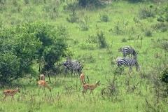 naturparks_uganda_12n