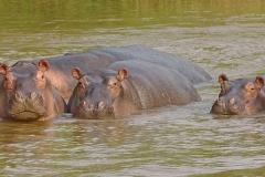 naturparks_uganda_14n