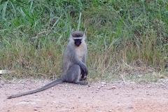 naturparks_uganda_16n