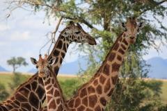 naturparks_uganda_25n