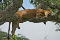 naturparks_uganda_26n