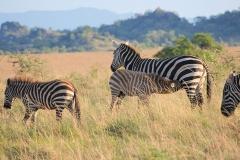 naturparks_uganda_28n