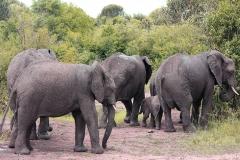 naturparks_uganda_03n