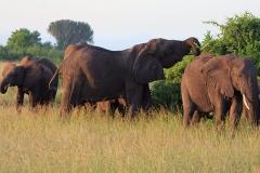 naturparks_uganda_06n