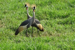 naturparks_uganda_13n