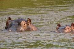 naturparks_uganda_15n