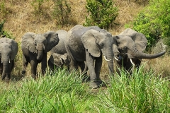 naturparks_uganda_19n