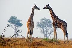 naturparks_uganda_20n