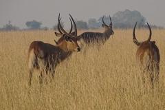 naturparks_uganda_21n