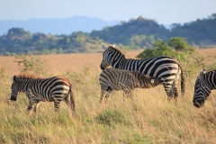 naturparks_uganda_24n